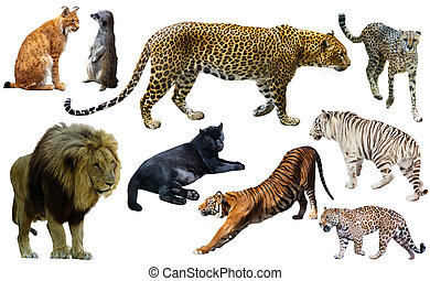 Set of wild mammals isolated over white