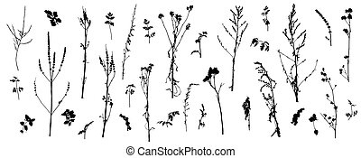 Set of wild plants (weeds), silhouette of bare stems of plants. Vector illustration.