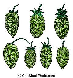Set og Hop plant vector drawing illustration. Hand drawn...