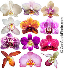 set orchid head isolated on white