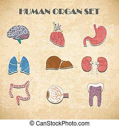 set, organi, interno