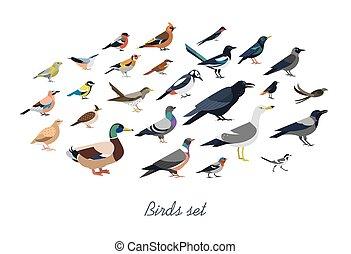 set, overzicht., vogels, stijl, stad, vrijstaand,...