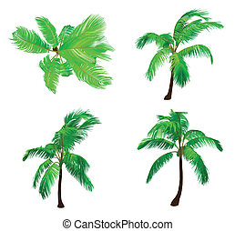 Set palm tree. Vector - coconut palm tree - vector...