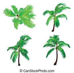 Set palm tree. Vector