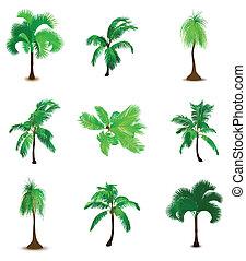 set, palme