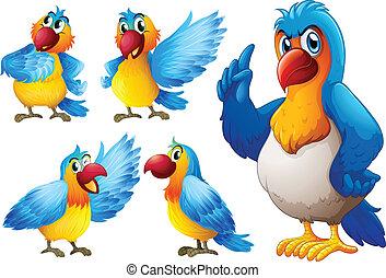 set, pappagallo
