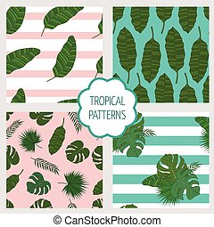 Set patterns. Leaves of the tropical palm trees.