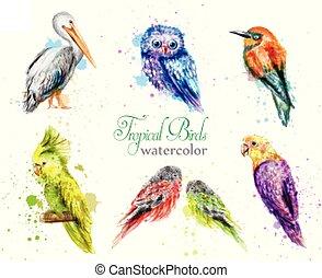 set, pauw, papegaai, uil, watercolor, verzamelingen, pelikan, vogels, vector.