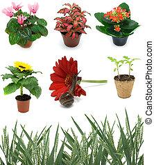 set plant