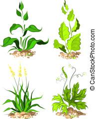 Set plants for design