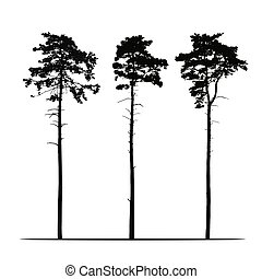 Set Realistic illustration of tall coniferous pine trees. Isolated on white background, vector