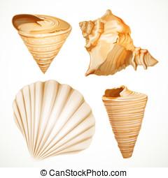 Set realistic seashells isolated on white background 1