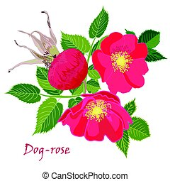 Set red flowers of rose with leaves in realistic hand-drawn style