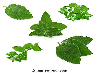 Set ripe green mint twigs (isolated)