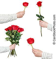 set, rosa, isolato, mano, fiori bianchi, rosso