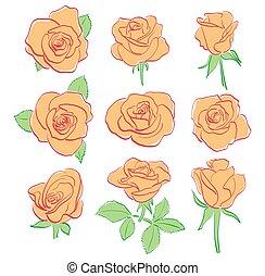 set, -, rozen, vector, sinaasappel, rood