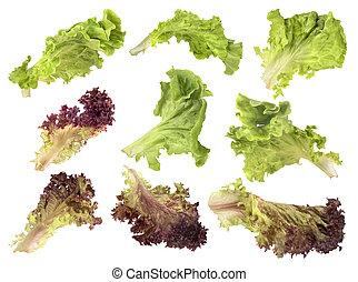Set salad on white background