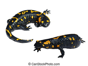 Set Salamander isolated on white