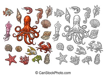 Set sea animals. Shell, coral, crab, shrimp, star, fish ,octopus