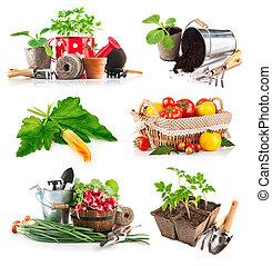 Set seedlings and harvest vegetable