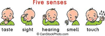 set., sensi, cinque, icona