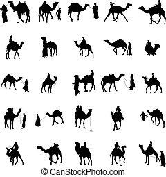 set, silhouette, kameel