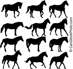 Set  silhouette of horse. vector illustration.