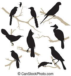 set., silhouette, oiseaux, vector.