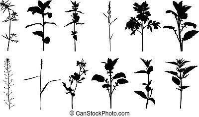 Set silhouette summer herbals plants