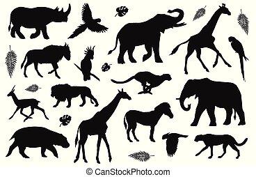 set, silhouette, vector, black , afrikaan, dieren