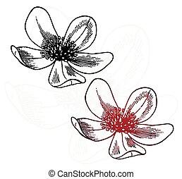 Set - sketch two field flowers