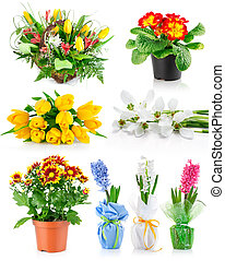 set spring flowers with green leaves