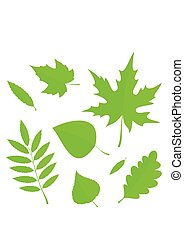 Set Spring Leaves in flat style isolated on white background.