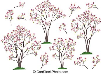 Magnolia Trees and Branches - Set Spring Magnolia Trees and...
