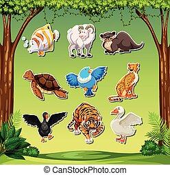 set, sticket, animale