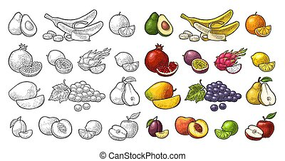 Set tropical fruits. Vector black vintage engraving isolated on white