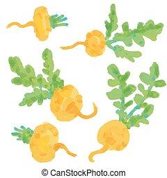 Set Turnip. Hand drawn painting on white background.