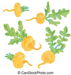 Set Turnip. Hand drawn painting on white background.