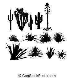 set, van, agave, planten
