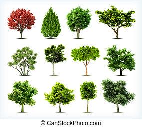 set, van, bomen, isolated., vector