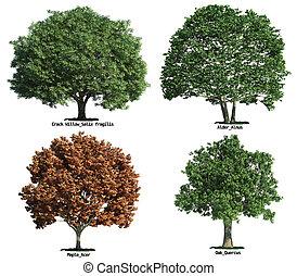 set, van, bomen, vrijstaand, op wit