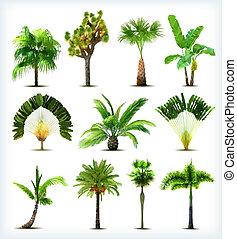 set, van, gevarieerd, palm, bomen., vector