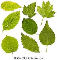 set, van, groen blad