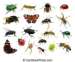 set, van, insecten