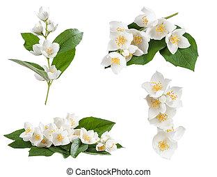set, van, jasmijn, bloemen