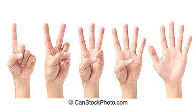 set, van, nummer 1, 2, 3, 4, 5, met, handgebaren, vrijstaand, op wit, achtergrond