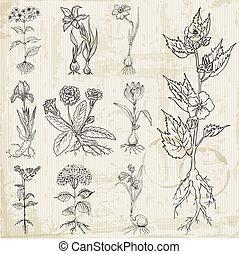 set, van, ouderwetse , bloemen, -, hand, getrokken, -, in, vector