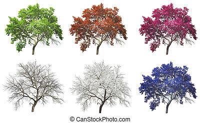 set, van, quatres saisons, boompje, vrijstaand, op wit, achtergrond
