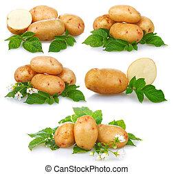 set, van, rijp, aardappels, groente, met, groene, vellen, vrijstaand