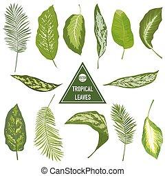 set, van, tropische , bladeren, -, voor, ontwerp onderdelen, scrapbooking, -, in, vector